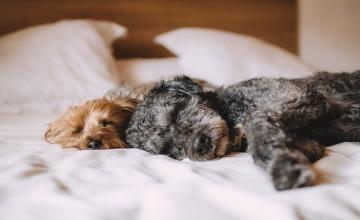 Zwierzak w mieszkaniu – praktyczne porady